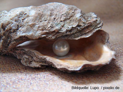 oyster_light_sea_shell_shell_pearl_nature_north_sea_beads-807926